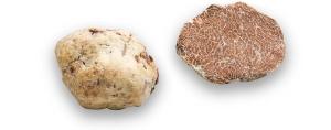 truffe-blanche