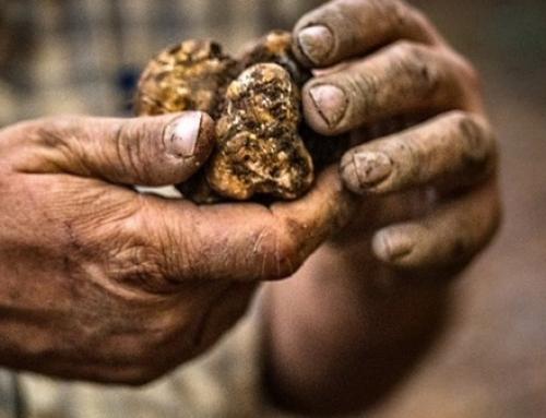 La truffe ou les mystères de l'or noir