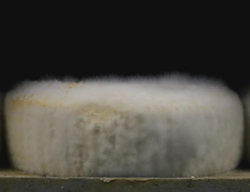 Le fromage vit et tant mieux !