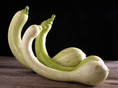 Trombetta zucchina, courgette trompette
