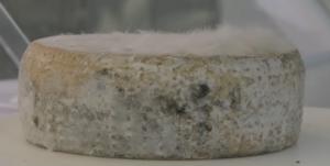 Le fromage vit et </p srcset=