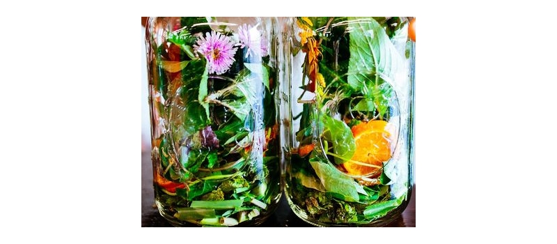 plantes en bouteille